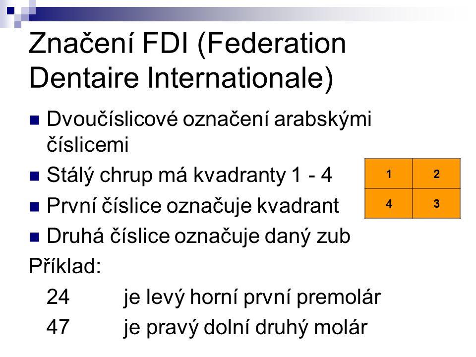Značení FDI (Federation Dentaire Internationale) Dvoučíslicové označení arabskými číslicemi Stálý chrup má kvadranty 1 - 4 První číslice označuje kvadrant Druhá číslice označuje daný zub Příklad: 24je levý horní první premolár 47je pravý dolní druhý molár 12 43