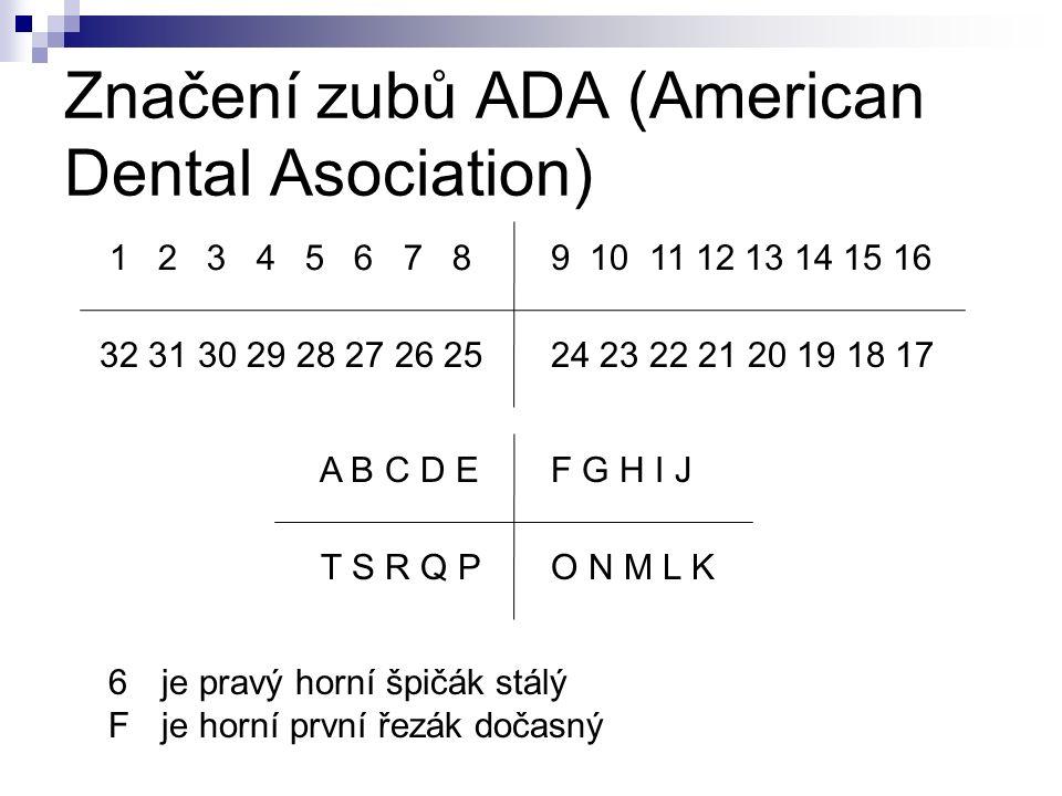 Značení zubů ADA (American Dental Asociation) 1 2 3 4 5 6 7 8 9 10 11 12 13 14 15 16 24 23 22 21 20 19 18 1732 31 30 29 28 27 26 25 A B C D EF G H I J O N M L KT S R Q P 6je pravý horní špičák stálý Fje horní první řezák dočasný