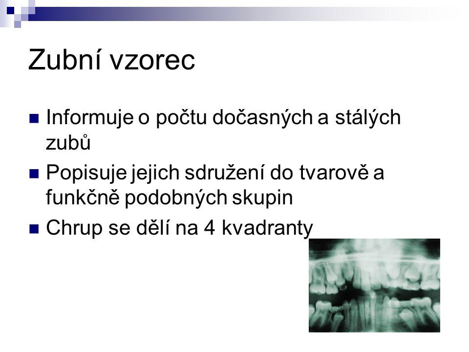 Zubní vzorec Informuje o počtu dočasných a stálých zubů Popisuje jejich sdružení do tvarově a funkčně podobných skupin Chrup se dělí na 4 kvadranty