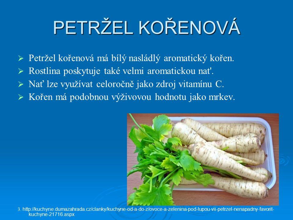 PETRŽEL KOŘENOVÁ   Petržel kořenová má bílý nasládlý aromatický kořen.   Rostlina poskytuje také velmi aromatickou nat'.   Nať lze využívat celo