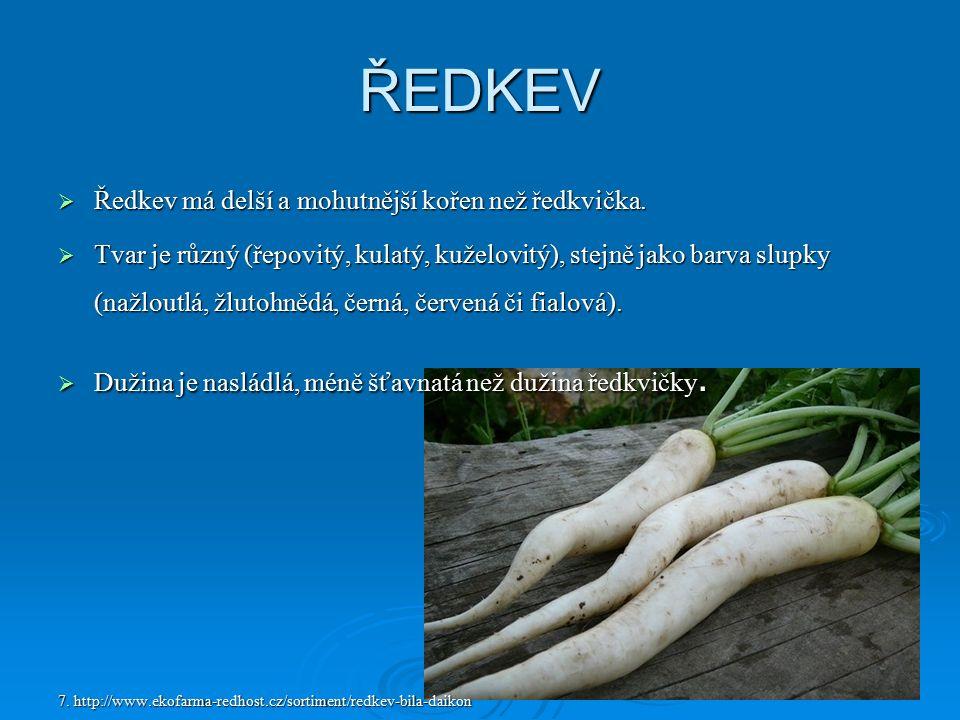 ŘEDKEV  Ředkev má delší a mohutnější kořen než ředkvička.  Tvar je různý (řepovitý, kulatý, kuželovitý), stejně jako barva slupky (nažloutlá, žlutoh