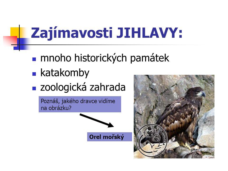 Zajímavosti JIHLAVY: mnoho historických památek katakomby zoologická zahrada Orel mořský Poznáš, jakého dravce vidíme na obrázku?