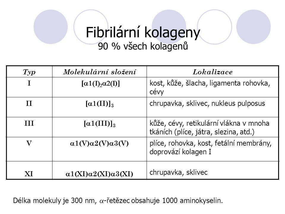 TypMolekulární složeníLokalizace I [    )] kost, kůže, šlacha, ligamenta rohovka, cévy II [  (II)] 3 chrupavka, sklivec, nukleus pulposus III [  1(III)] 3 kůže, cévy, retikulární vlákna v mnoha tkáních (plíce, játra, slezina, atd.) V XI  1(V)  2(V)  3(V)  1(XI)  2(XI)  3(XI) plíce, rohovka, kost, fetální membrány, doprovází kolagen I chrupavka, sklivec Fibrilární kolageny 90 % všech kolagenů Délka molekuly je 300 nm,  -řetězec obsahuje 1000 aminokyselin.