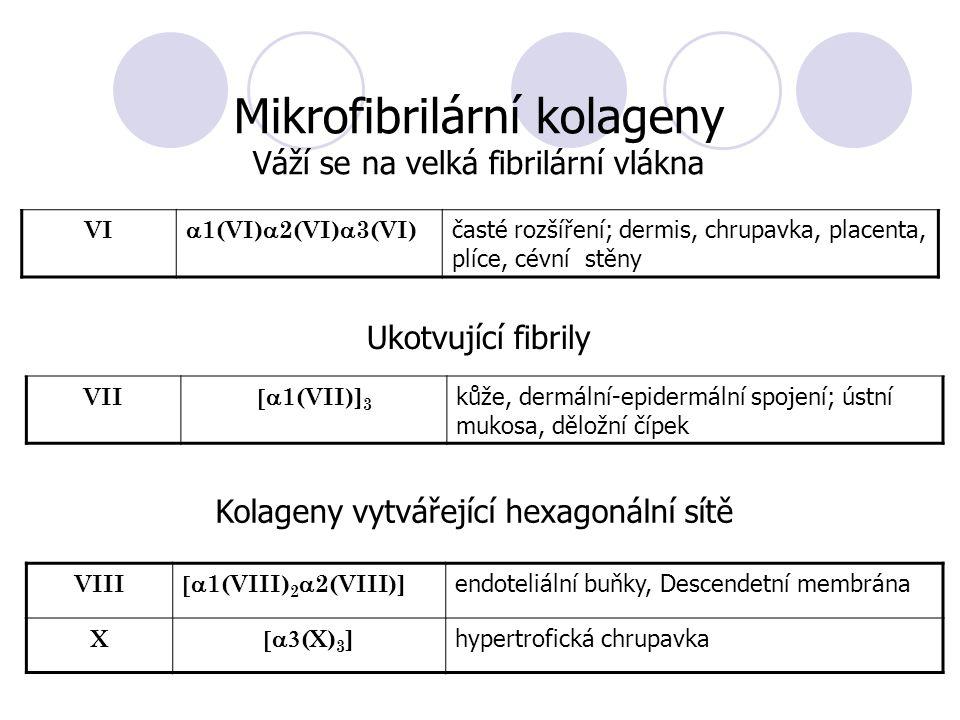 VI  1(VI)  2(VI)  3(VI) časté rozšíření; dermis, chrupavka, placenta, plíce, cévní stěny Mikrofibrilární kolageny Váží se na velká fibrilární vlákna VII  1(VII)] 3 kůže, dermální-epidermální spojení; ústní mukosa, děložní čípek Ukotvující fibrily Kolageny vytvářející hexagonální sítě VIII  1(VIII) 2  2(VIII)] endoteliální buňky, Descendetní membrána X  (X) 3 ] hypertrofická chrupavka