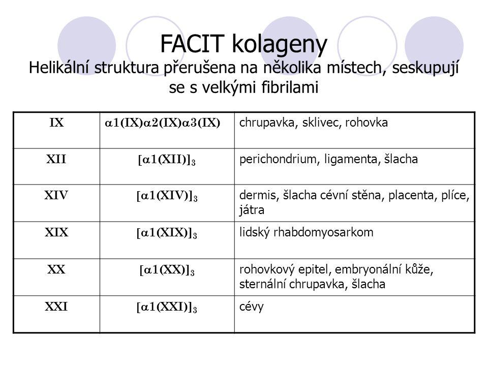 IX  1(IX)  2(IX)  3(IX) chrupavka, sklivec, rohovka XII  1(XII)] 3 perichondrium, ligamenta, šlacha XIV  1(XIV)] 3 dermis, šlacha cévní stěna, placenta, plíce, játra XIX  1(XIX)] 3 lidský rhabdomyosarkom XX  1(XX)] 3 rohovkový epitel, embryonální kůže, sternální chrupavka, šlacha XXI  1(XXI)] 3 cévy FACIT kolageny Helikální struktura přerušena na několika místech, seskupují se s velkými fibrilami
