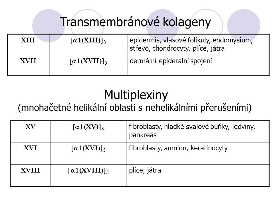 XIII  1(XIII)] 3 epidermis, vlasové folikuly, endomysium, střevo, chondrocyty, plíce, játra XVII  1(XVII)] 3 dermální-epiderální spojení Transmembránové kolageny Multiplexiny (mnohačetné helikální oblasti s nehelikálními přerušeními) XV  1(XV)] 3 fibroblasty, hladké svalové buňky, ledviny, pankreas XVI  1(XVI)] 3 fibroblasty, amnion, keratinocyty XVIII  1(XVIII)] 3 plíce, játra