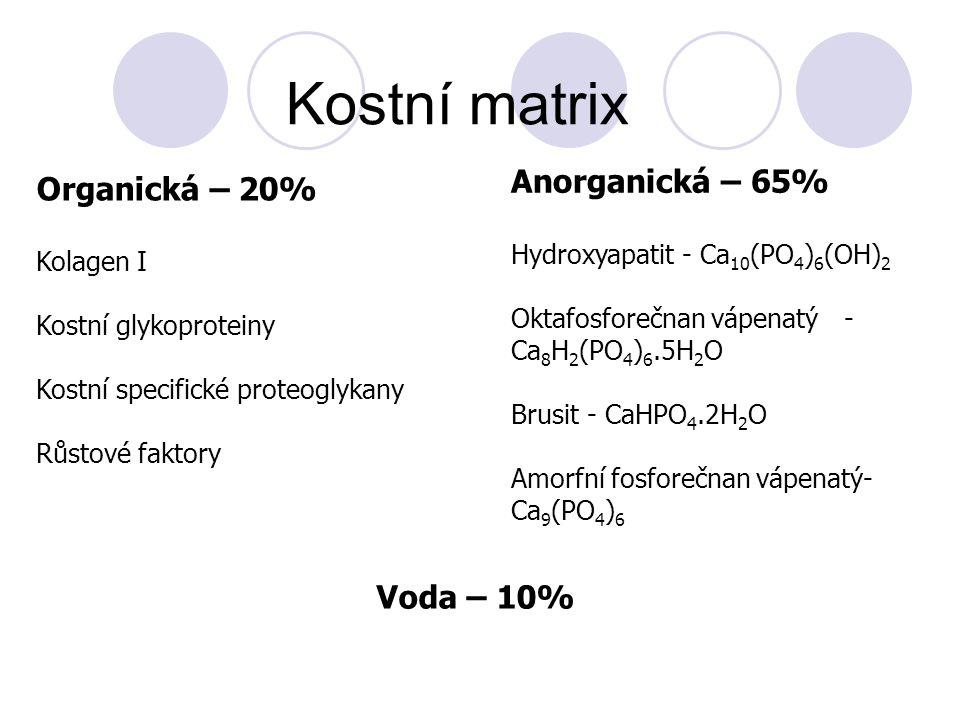 Kostní matrix Organická – 20% Kolagen I Kostní glykoproteiny Kostní specifické proteoglykany Růstové faktory Anorganická – 65% Hydroxyapatit - Ca 10 (PO 4 ) 6 (OH) 2 Oktafosforečnan vápenatý - Ca 8 H 2 (PO 4 ) 6.5H 2 O Brusit - CaHPO 4.2H 2 O Amorfní fosforečnan vápenatý- Ca 9 (PO 4 ) 6 Voda – 10%