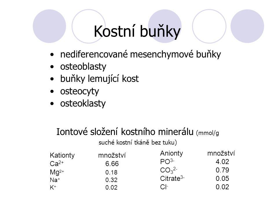 nediferencované mesenchymové buňky osteoblasty buňky lemující kost osteocyty osteoklasty Iontové složení kostního minerálu (mmol/g suché kostní tkáně bez tuku) Kostní buňky Kationty množství Ca 2+ 6.66 Mg 2+ 0.18 Na + 0.32 K + 0.02 Anionty množství PO 3- 4.02 CO 3 2- 0.79 Citrate 3- 0.05 Cl - 0.02