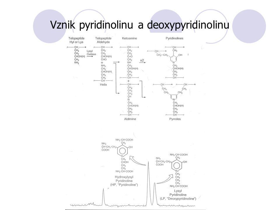 Vznik pyridinolinu a deoxypyridinolinu