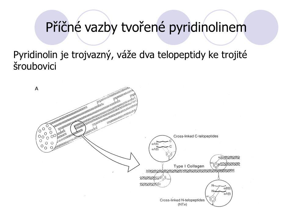 Příčné vazby tvořené pyridinolinem Pyridinolin je trojvazný, váže dva telopeptidy ke trojité šroubovici