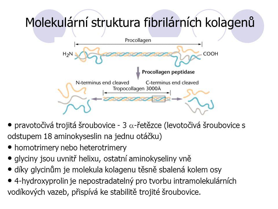 Molekulární struktura fibrilárních kolagenů pravotočivá trojitá šroubovice - 3  -řetězce (levotočivá šroubovice s odstupem 18 aminokyseslin na jednu otáčku) homotrimery nebo heterotrimery glyciny jsou uvnitř helixu, ostatní aminokyseliny vně díky glycinům je molekula kolagenu těsně sbalená kolem osy 4-hydroxyprolin je nepostradatelný pro tvorbu intramolekulárních vodíkových vazeb, přispívá ke stabilitě trojité šroubovice.