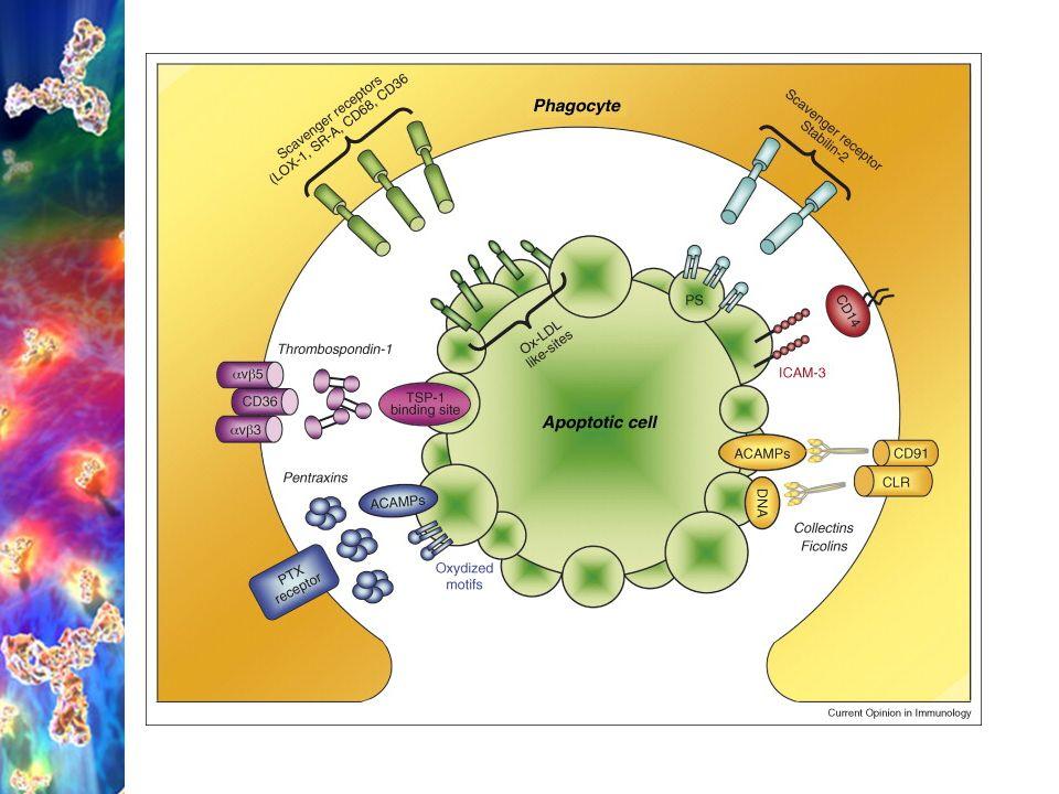 Vrozená (nespecifická) imunita PAMP (Pathogen Associated Molecular Pattern) s patogenem asociované molekulové vzory konzervované mikrobiální struktury – mozaiky povrchových a nitrobuněčných molekul MO (peptidoglykan, kys.