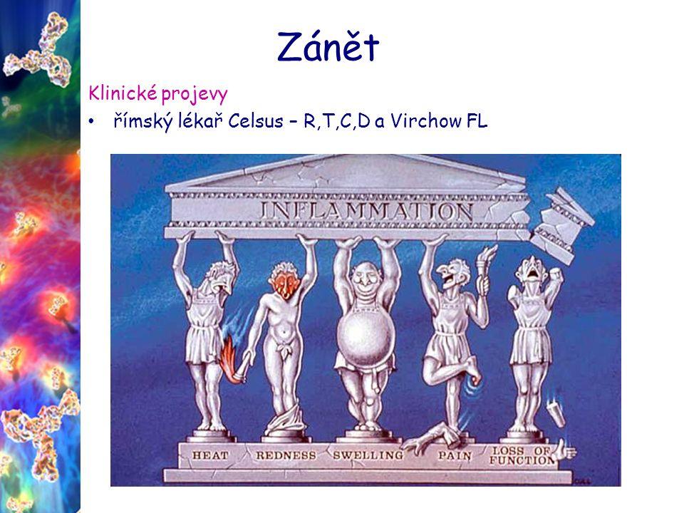 Zánět Klinické projevy římský lékař Celsus – R,T,C,D a Virchow FL