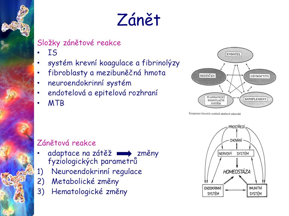 Zánět 1) Neuroendokrinní regulace sickness behavior – somnolence - anorexie ( leptin - adipokin) - horečka hypotalamus hypohýza nadledvinky kortisol (tlumení zánětové reakce) produkce katecholaminů (adrenalin, noradr, dopamin) tvorba IGF (insulin-like growth factor) – podobné strukturně inzulinu, IGF jsou součástí komplexního systému, který buňky používají ke komunikaci s jejich fyziologickým prostředím.