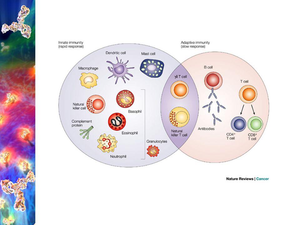 Vrozená (nespecifická) imunita mastocyty = žírné b.