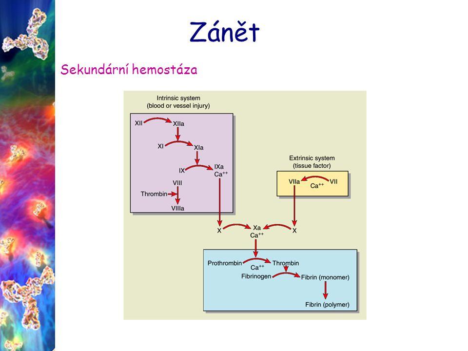 Zánět Fibrinolytický systém plazmin – cirkuluje jako neaktivní proenzym plazminogen - volný plazmin inhibován α2- antiplazminem aktivace plazminogenu pomocí tPA (endotel.