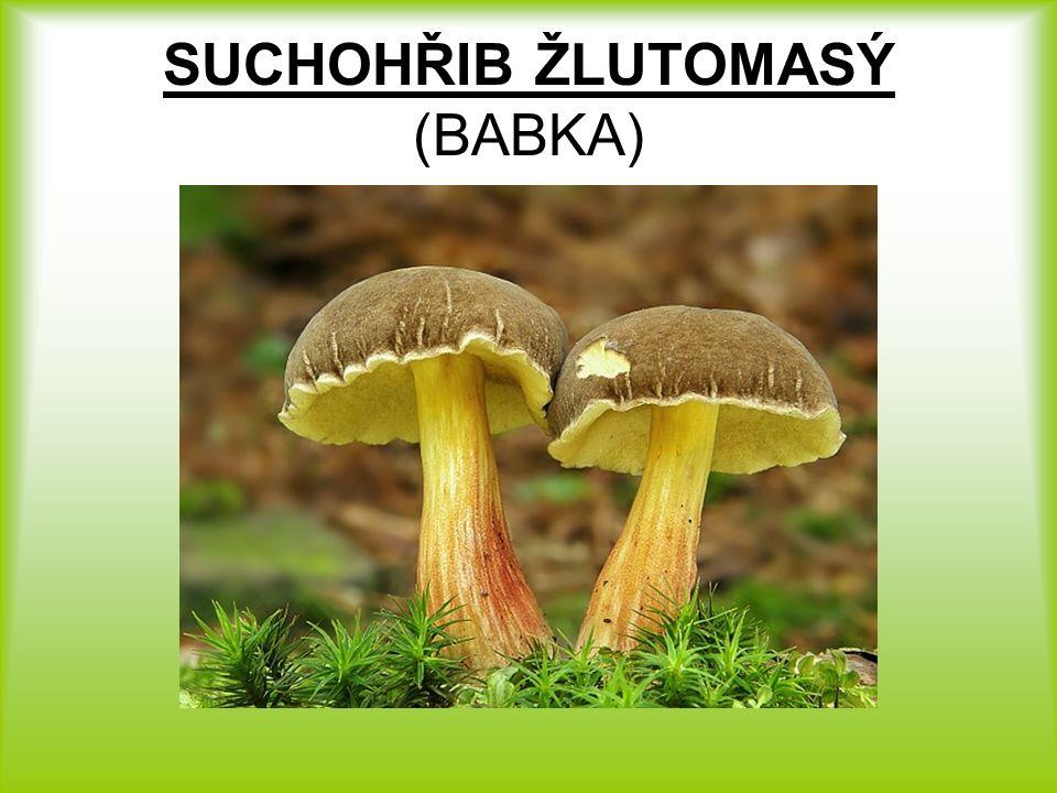SPRÁVNÉ ŘEŠENÍ 1.MUCHOMŮRKA ZELENÁ 2. SUCHOHŘIB ŽLUTOMASÝ (BABKA) 3.