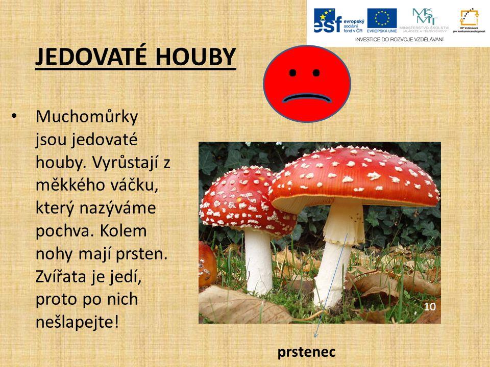 JEDOVATÉ HOUBY. Muchomůrky jsou jedovaté houby. Vyrůstají z měkkého váčku, který nazýváme pochva.