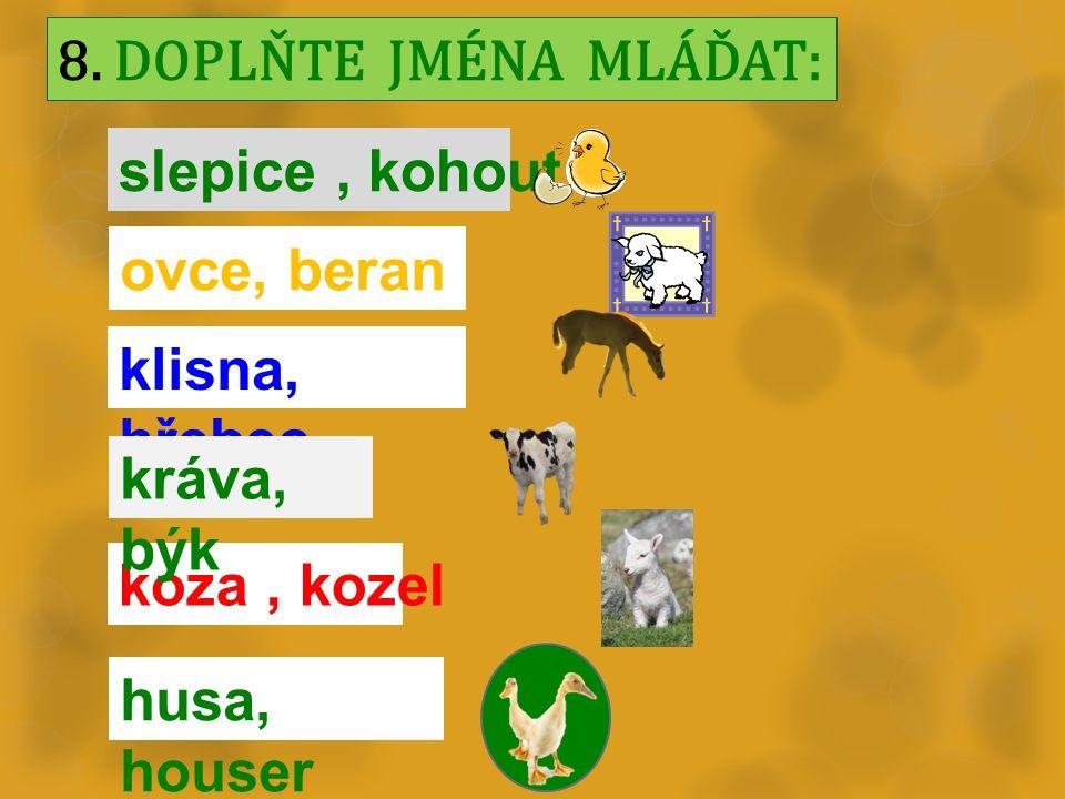 8. DOPLŇTE JMÉNA MLÁĎAT: slepice, kohout koza, kozel ovce, beran klisna, hřebec kráva, býk husa, houser