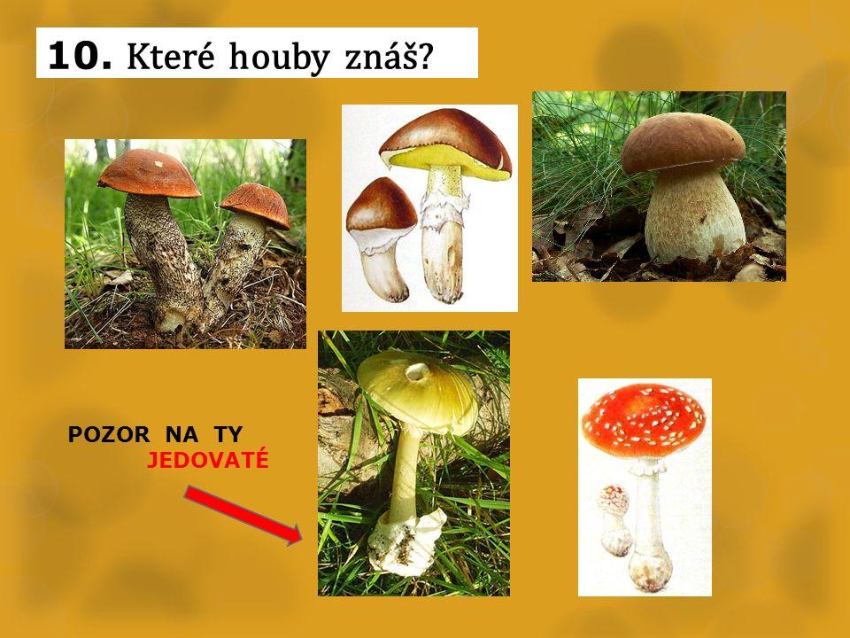 10. Které houby znáš POZOR NA TY JEDOVATÉ
