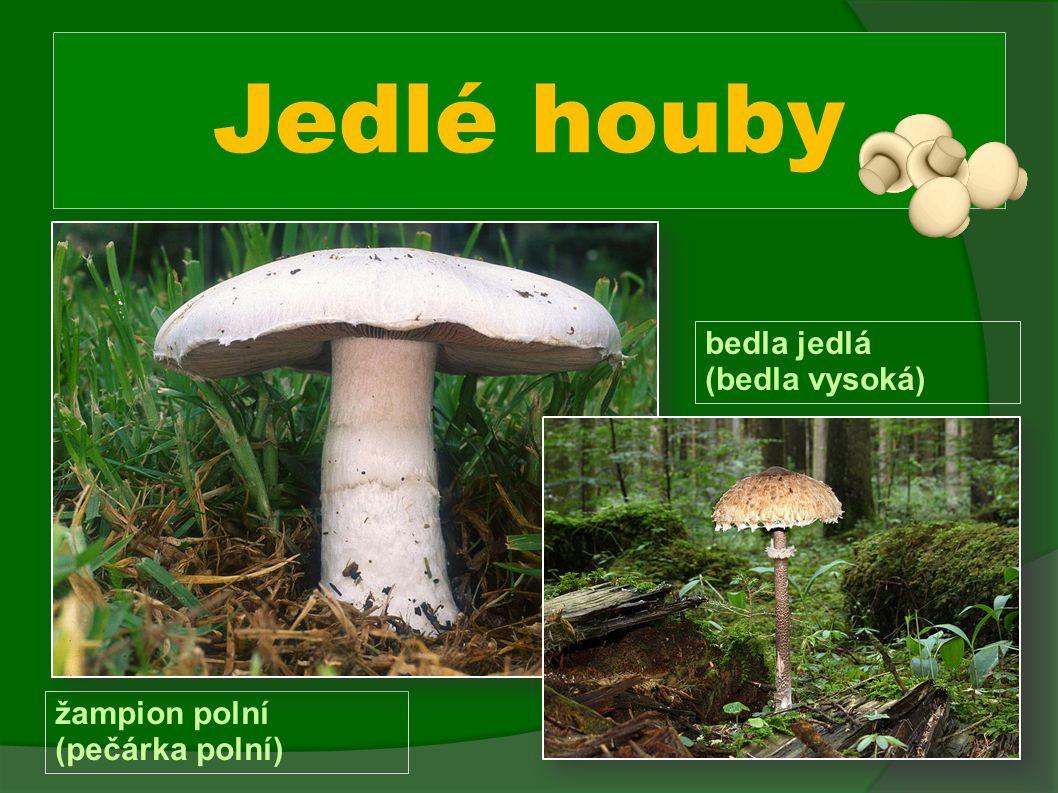 Jedlé houby žampion polní (pečárka polní) bedla jedlá (bedla vysoká)