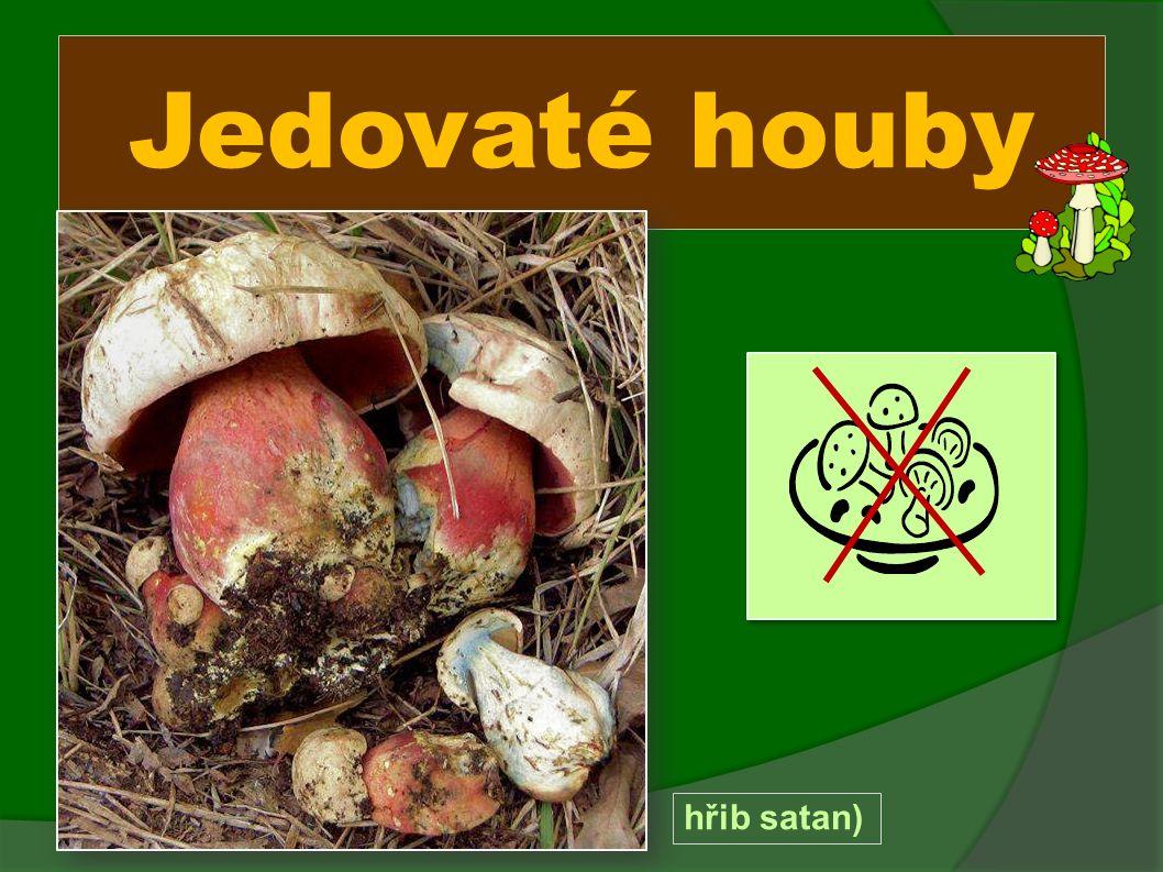 Jedovaté houby hřib satan)