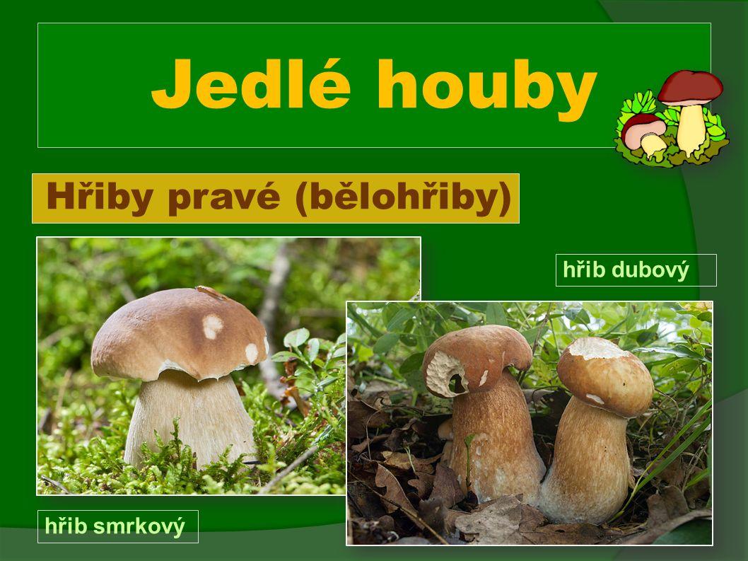 Jedlé houby Hřiby pravé (bělohřiby) hřib smrkový hřib dubový
