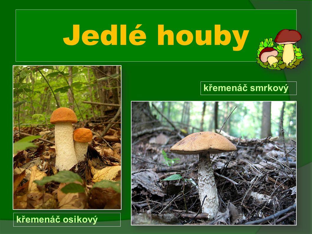 Jedlé houby křemenáč osikový křemenáč smrkový