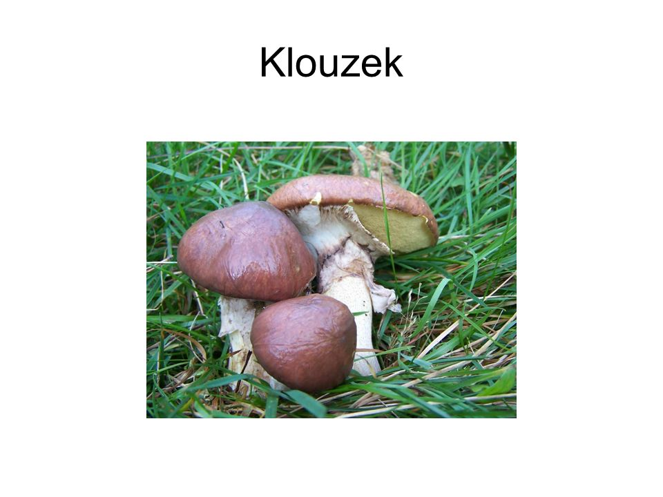 Klouzek