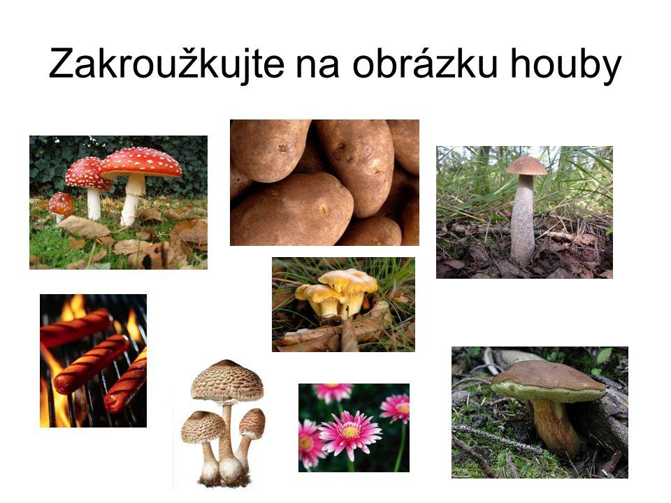 Zakroužkujte na obrázku houby