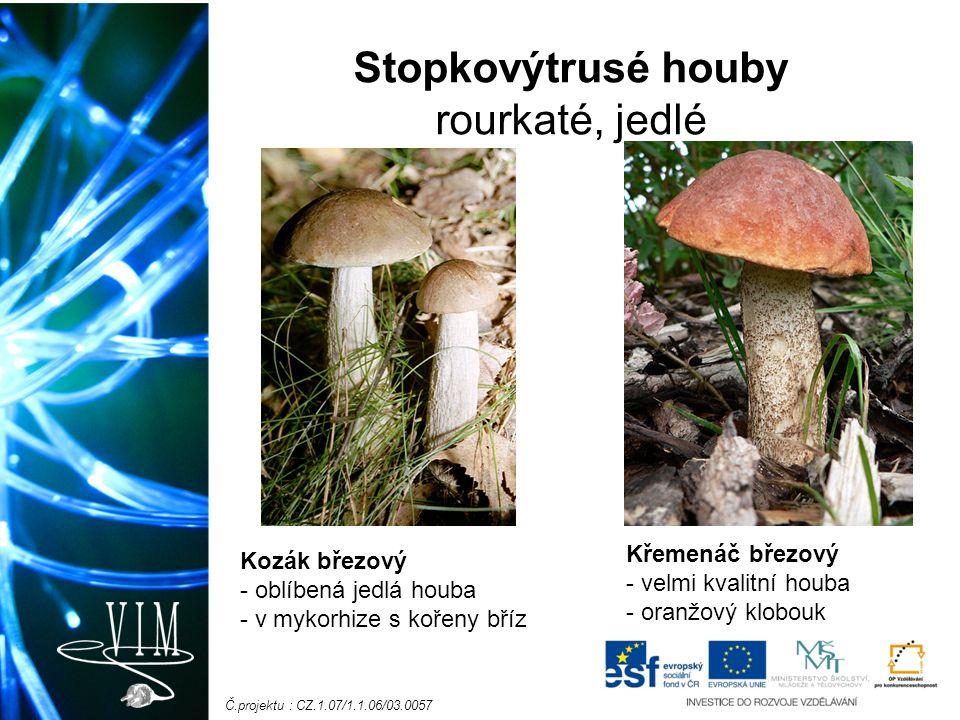 Č.projektu : CZ.1.07/1.1.06/03.0057 Stopkovýtrusé houby rourkaté, jedlé Kozák březový - oblíbená jedlá houba - v mykorhize s kořeny bříz Křemenáč březový - velmi kvalitní houba - oranžový klobouk