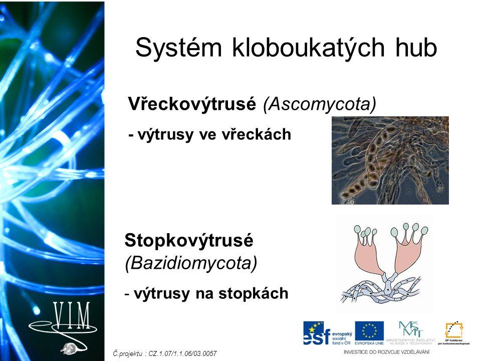 Č.projektu : CZ.1.07/1.1.06/03.0057 Systém kloboukatých hub Vřeckovýtrusé (Ascomycota) - výtrusy ve vřeckách Stopkovýtrusé (Bazidiomycota) - výtrusy na stopkách