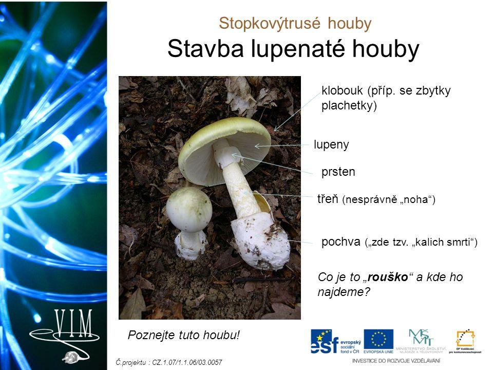 Č.projektu : CZ.1.07/1.1.06/03.0057 Stavba lupenaté houby klobouk (příp.
