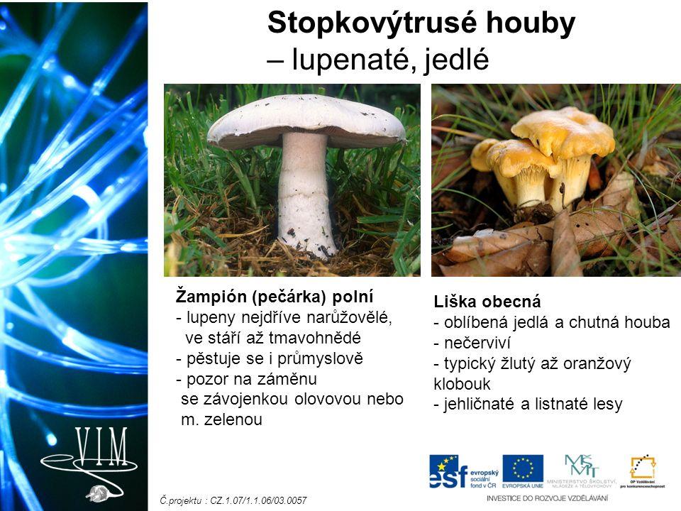 Č.projektu : CZ.1.07/1.1.06/03.0057 Stopkovýtrusé houby – lupenaté, jedlé Žampión (pečárka) polní - lupeny nejdříve narůžovělé, ve stáří až tmavohnědé - pěstuje se i průmyslově - pozor na záměnu se závojenkou olovovou nebo m.