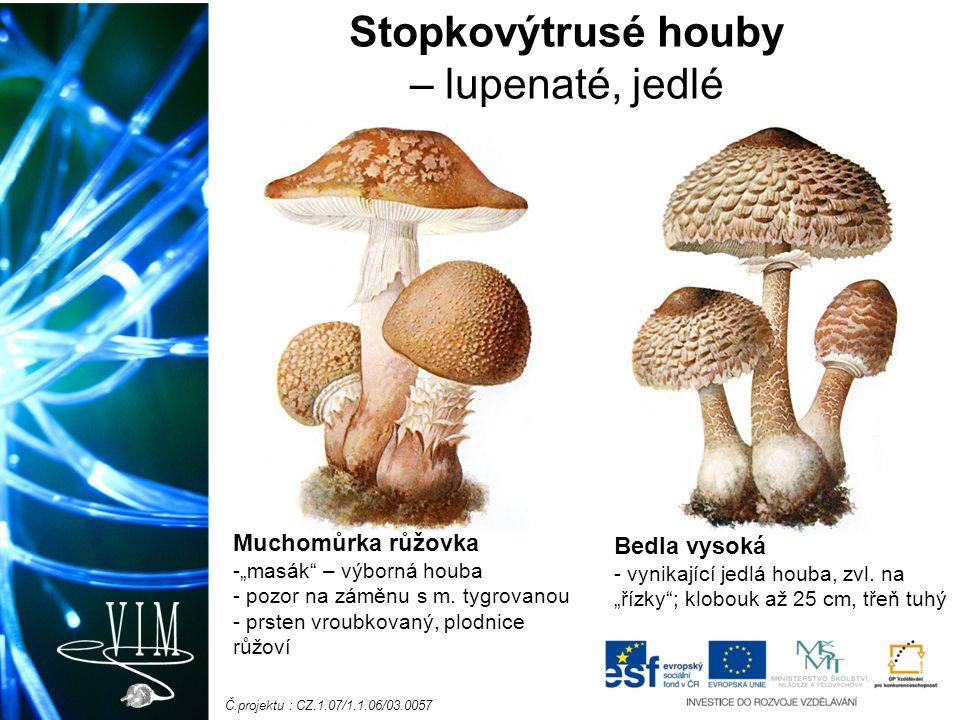 """Č.projektu : CZ.1.07/1.1.06/03.0057 Stopkovýtrusé houby – lupenaté, jedlé Muchomůrka růžovka -""""masák – výborná houba - pozor na záměnu s m."""