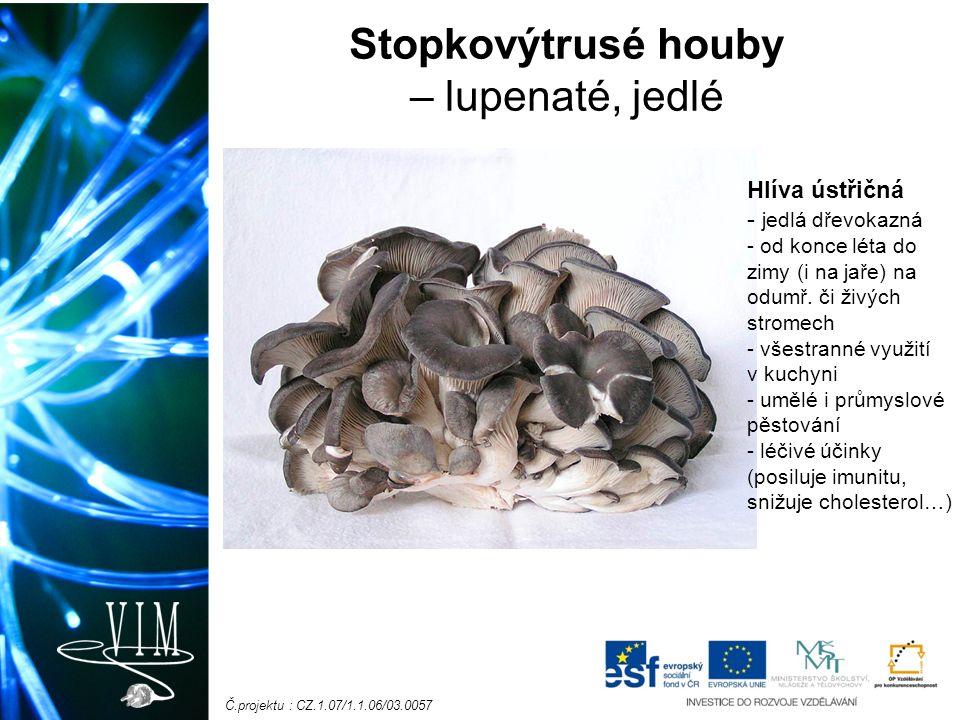 Č.projektu : CZ.1.07/1.1.06/03.0057 Stopkovýtrusé houby – lupenaté, jedlé Hlíva ústřičná - jedlá dřevokazná - od konce léta do zimy (i na jaře) na odumř.