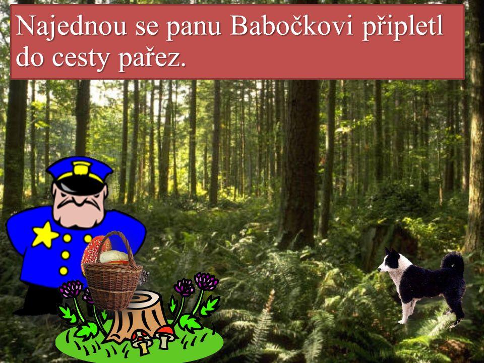 Pan Babočka s Očkem prochodili hluboký les křížem krážem. Našli spoustu hub.