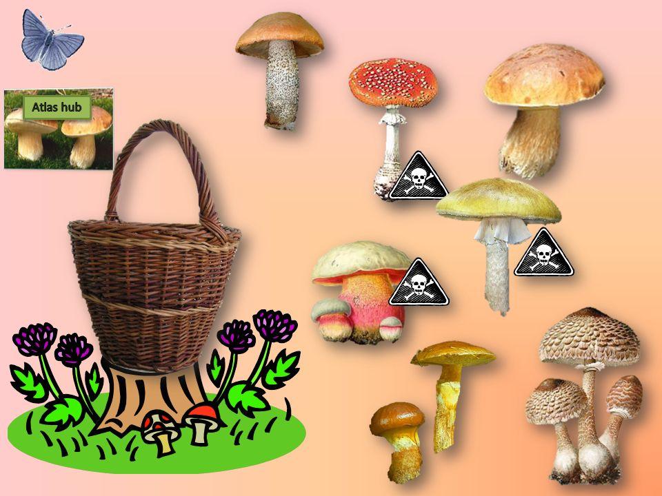Všechny houby, které našli nejsou jedlé.