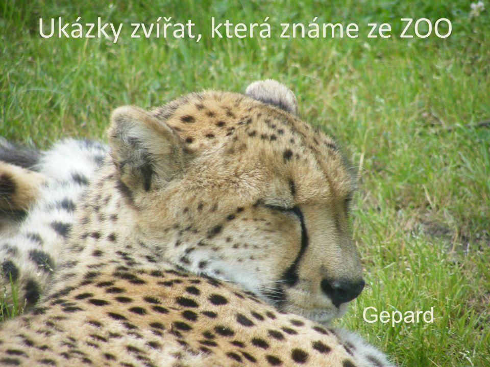 Ukázky zvířat, která známe ze ZOO Gepard