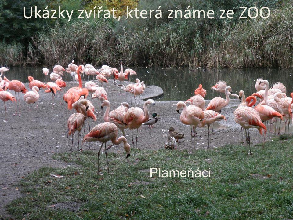 Plameňáci