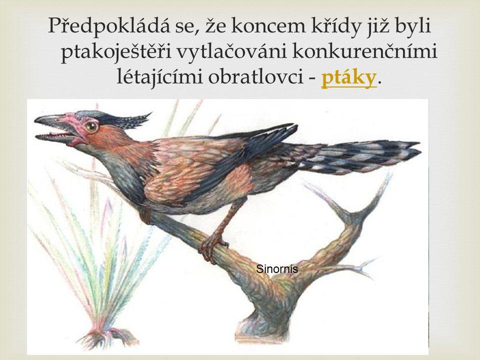 Předpokládá se, že koncem křídy již byli ptakoještěři vytlačováni konkurenčními létajícími obratlovci - ptáky. ptáky Pterodactylus Sinornis