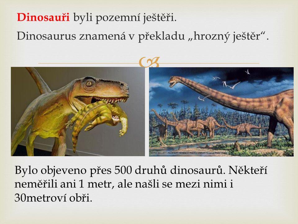 """ Dinosauři byli pozemní ještěři. Dinosaurus znamená v překladu """"hrozný ještěr"""". Bylo objeveno přes 500 druhů dinosaurů. Někteří neměřili ani 1 metr,"""