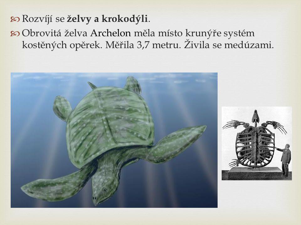  Rozvíjí se želvy a krokodýli.  Obrovitá želva Archelon měla místo krunýře systém kostěných opěrek. Měřila 3,7 metru. Živila se medúzami.