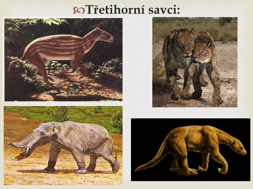  Třetihorní savci: