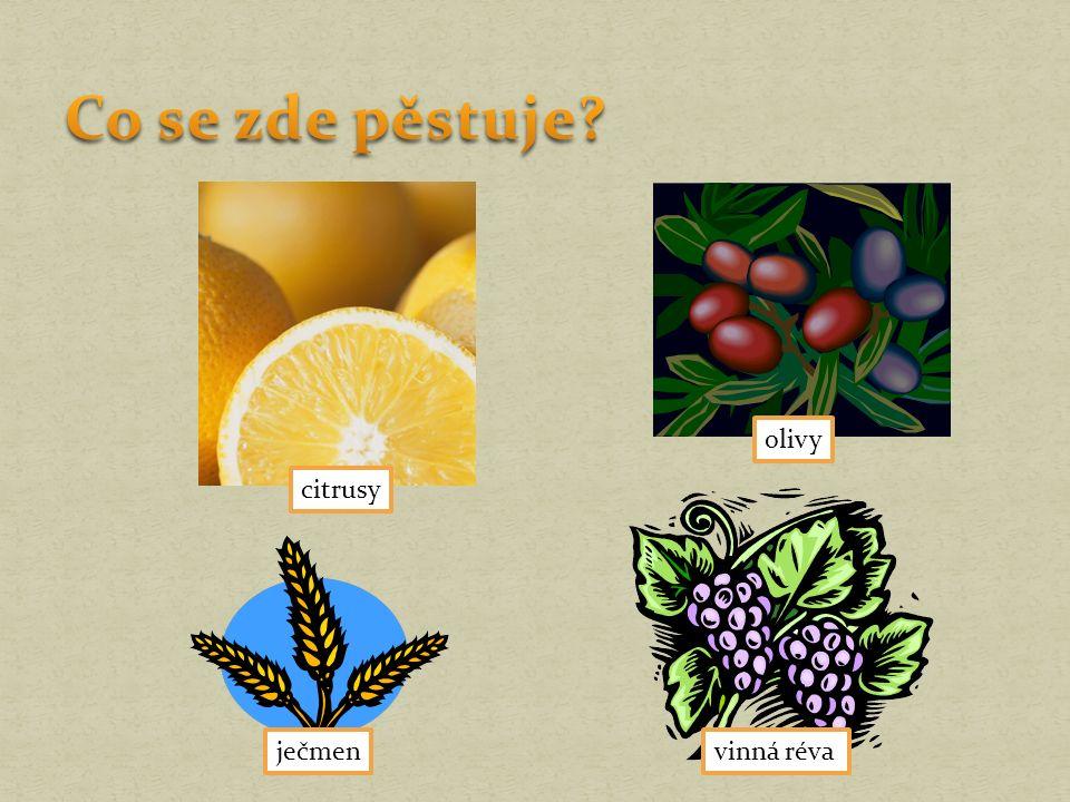 citrusy ječmen olivy vinná réva