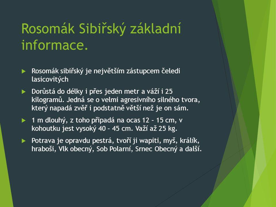 Rosomák Sibiřský základní informace.