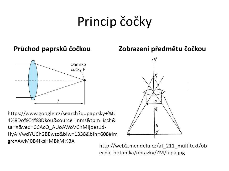 Princip čočky Průchod paprsků čočkouZobrazení předmětu čočkou http://web2.mendelu.cz/af_211_multitext/ob ecna_botanika/obrazky/ZM/lupa.jpg https://www.google.cz/search?q=paprsky+%C 4%8Do%C4%8Dkou&source=lnms&tbm=isch& sa=X&ved=0CAcQ_AUoAWoVChMIjoez1d- HyAIVwdYUCh2BEwsz&biw=1338&bih=608#im grc=AwM0B4fksHMBkM%3A