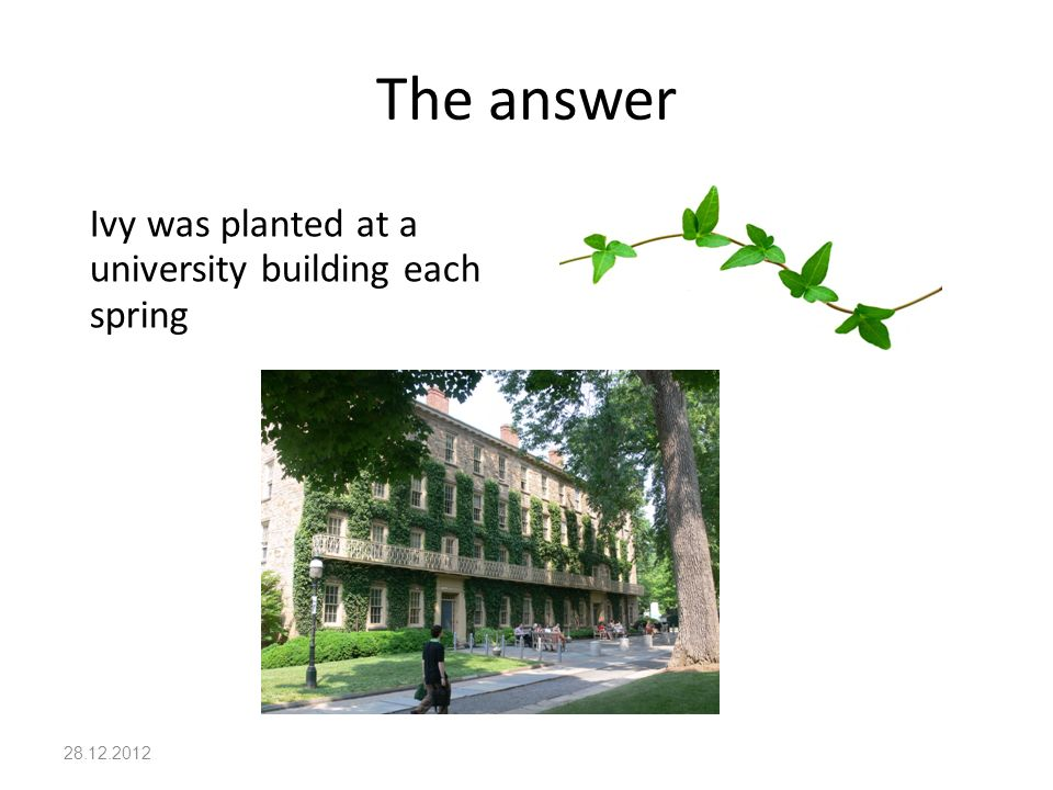 The answer 28.12.2012 Ivy was planted at a university building each spring
