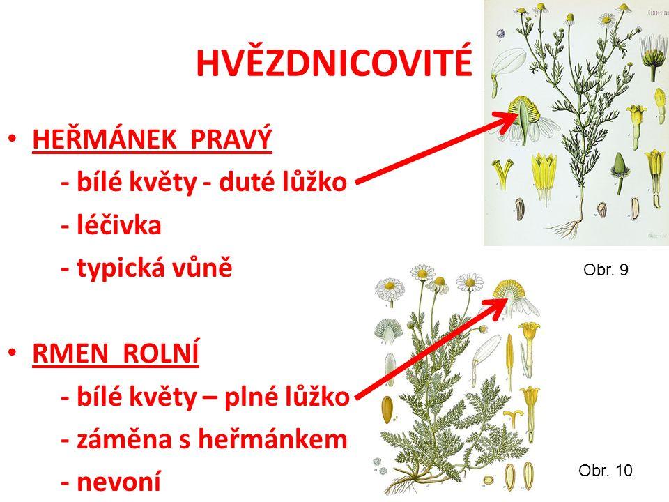 HVĚZDNICOVITÉ HEŘMÁNEK PRAVÝ - bílé květy - duté lůžko - léčivka - typická vůně RMEN ROLNÍ - bílé květy – plné lůžko - záměna s heřmánkem - nevoní Obr.
