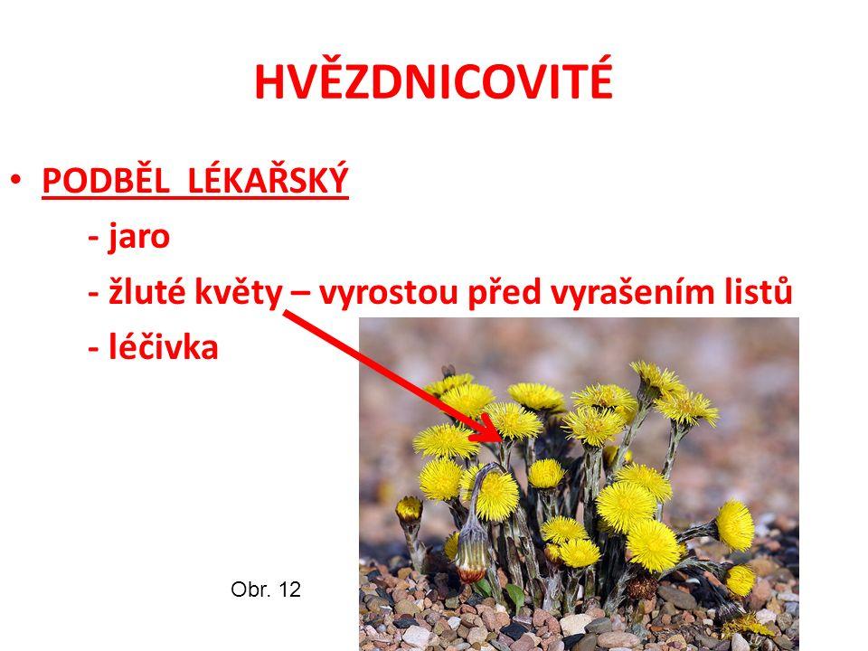 HVĚZDNICOVITÉ PODBĚL LÉKAŘSKÝ - jaro - žluté květy – vyrostou před vyrašením listů - léčivka Obr.